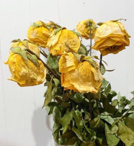 Dried Flowers Avenue 50